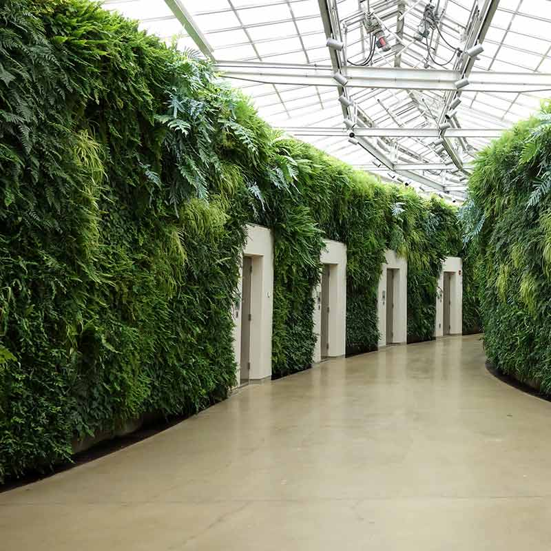 Green walls for your office space