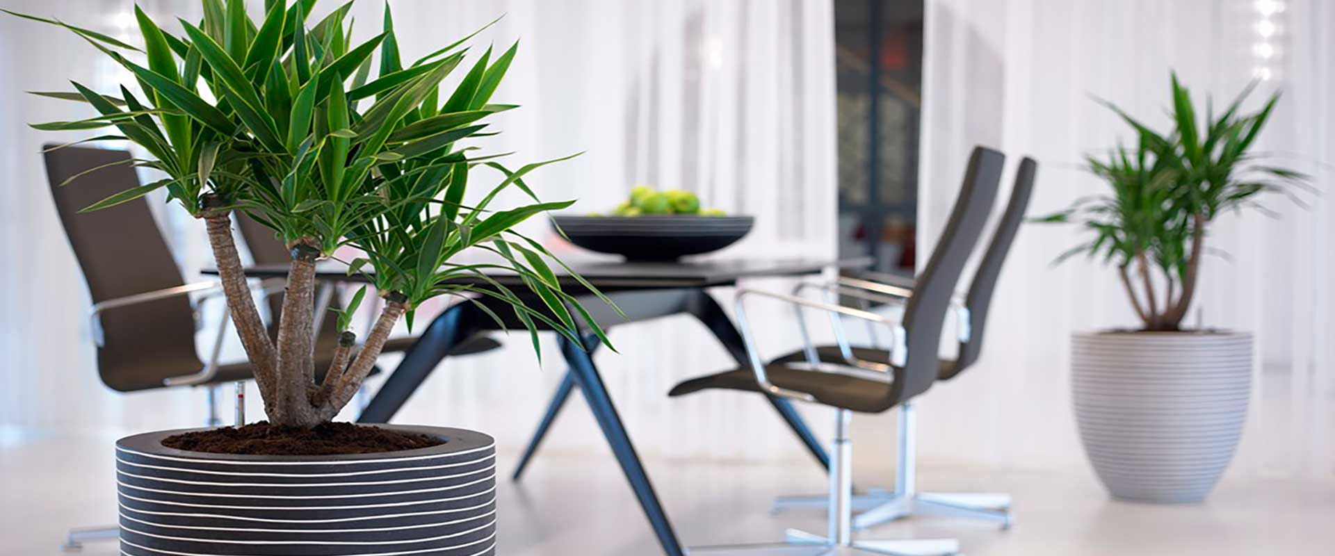 Large floor standing potted plants