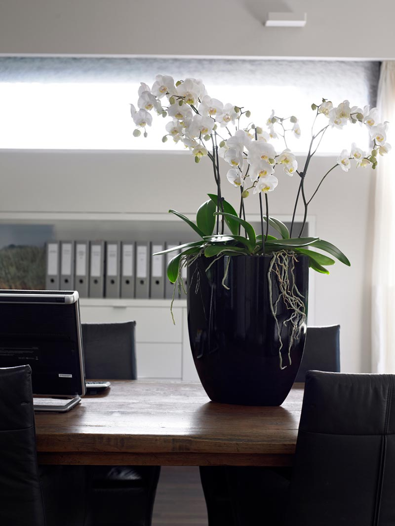 Interior office plants and flower displays with eco office plants