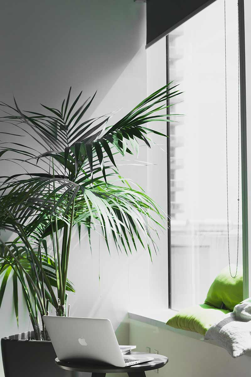Tall floor standing office plant